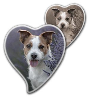 Fotka na psí pomníček