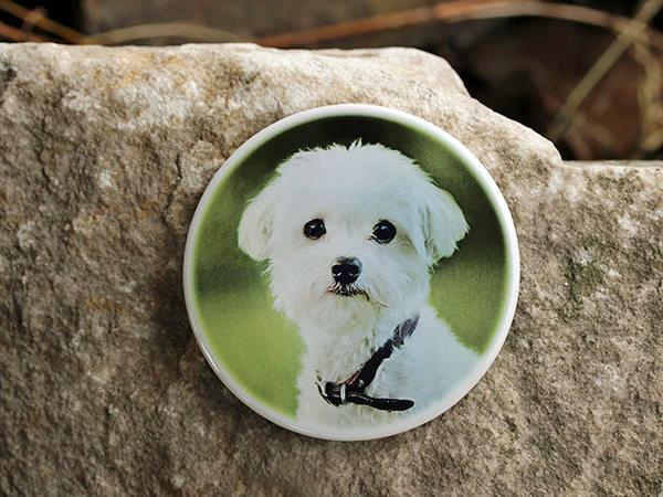 Foto na náhrobek pro psa, na psí hřbitov, pomníček, hrobeček