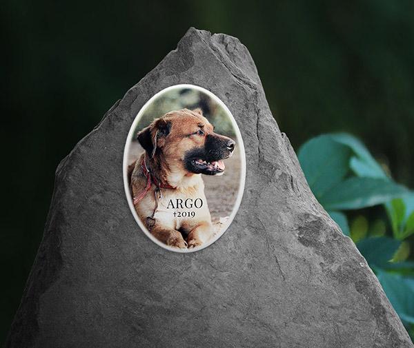 Fotografie na pomníček, psí foto na náhrobek, porcelánová fotka na psí hřbitov, hrob.