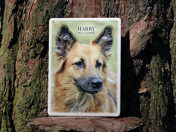 Foto na náhrobek pro psa, na psí hřbitov, pomník, hrob