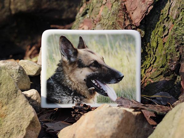 Foto na náhrobek pro psa, na psí hřbitov, pomník, psí hrob